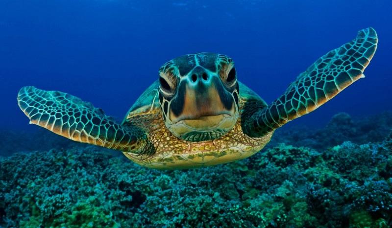 guia-basica-de-las-tortugas