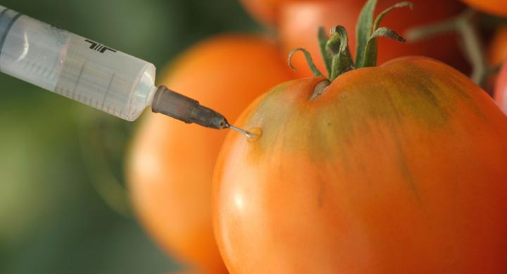 alimentos_transgenicos_y_el_valor_de_la_prueba_experimental