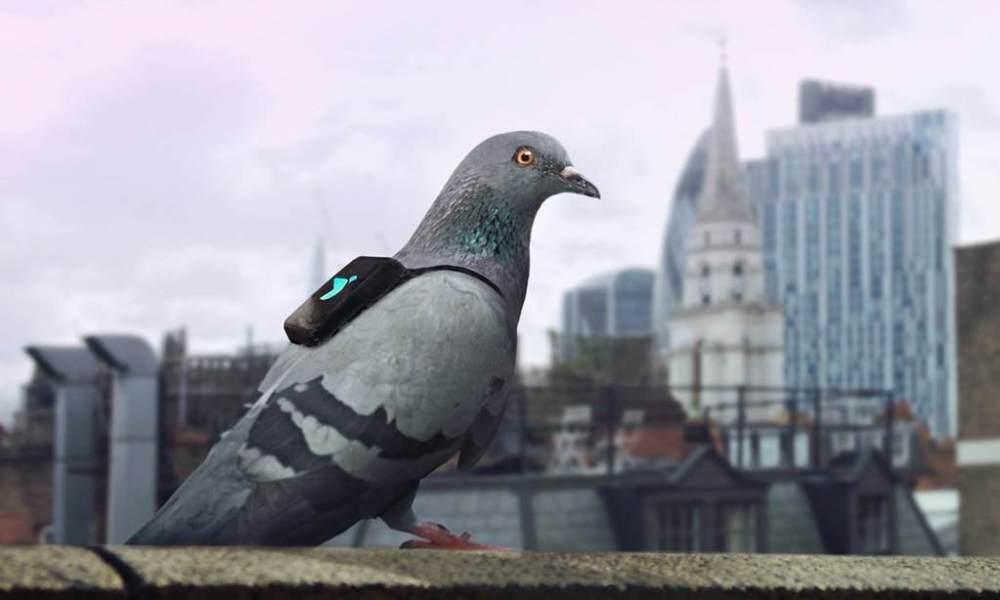 pigeon-patrol-jpg-1165x0_q67_crop-smart