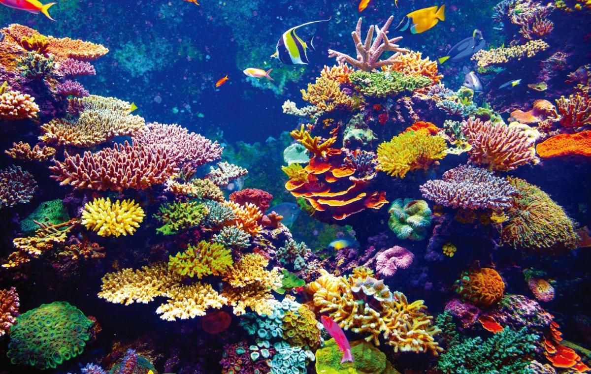 Denuncia funcionaria el ecocidio de corales en el Caribe mexicano