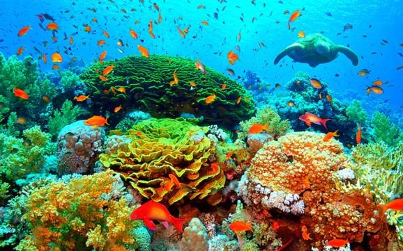 Premian a investigador de la UNAM por trabajo en favor de arrecifes de coral