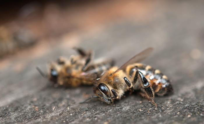 abejas equilibrio Tierra