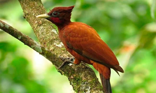 Colombia exhibe potencial en turismo de avistamiento de aves en Inglaterra