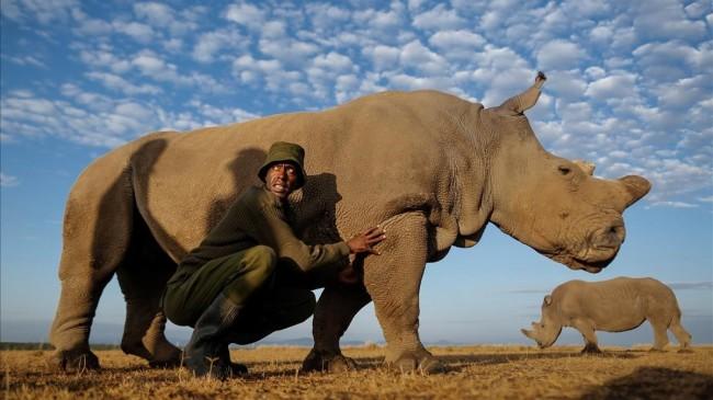 Muere el ultimo rinoceronte blanco del norte macho del mundo